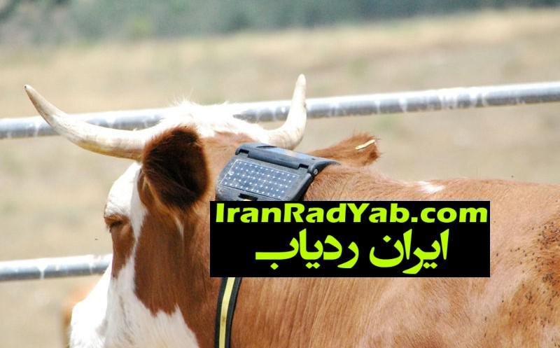 نصب ردیاب الکترونیک روی دام های ایرانی